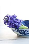 Bowl of cut hyacinths