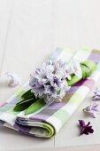 Hyacinth on checked linen napkin
