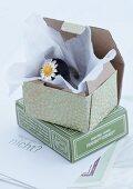Ring mit eingegossenem Gänseblümchen in offener Schachtel