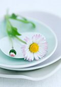 Gänseblümchen auf Teller