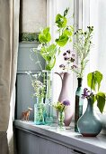 Pea shoots and flowering herbs in various vases on windowsill