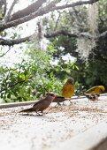 Vögel auf Steinbrüstung