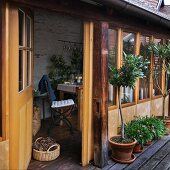 Row of potted trees and flowering plants outside rustic conservatory