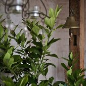 Green plants next to brass bell hanging on wooden post