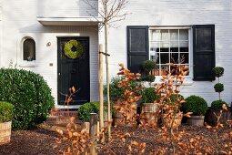 Eingang in gemütliches Landhaus mit Buchskugelbäumchen im Vorgarten