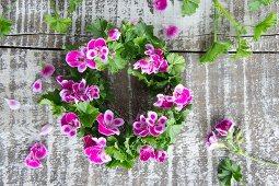 Wreath of scented pelargoniums (Pelargonium odoratissimum)