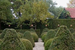 Gardens with topiary box bushes