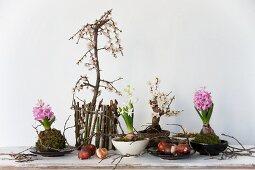 Small plum tree, bonsai plum tree (Prunus), flower bulbs and hyacinth