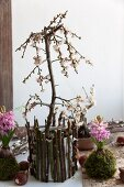 Small plum tree and hyacinths