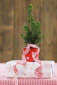 Kleiner Weihnachtsbaum im Topf auf einer Geschenkschachtel