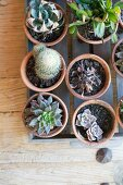 Top view of cacti and succulents in terracotta pots