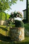 Climbing rose on arched trellis over old, stone well in Mediterranean garden