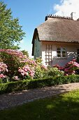 Gravel path and luxuriantly flowering herbaceous border in front of house with thatched roof