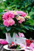 Pinkfarbene Hortensien im Topf und Dessertspeisen auf Gartentisch