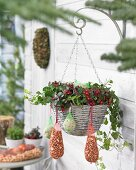 Wintergreen in hanging basket with bird food hanging from rim