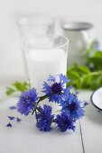Circlet of cornflowers in front of glass of milk
