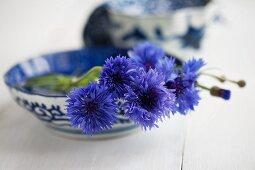Cornflowers in blue ceramic dish