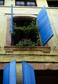 Open window with blooming vines in a historic facade of a South African town home with blue window shutters