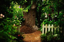 Spade and prepared planting hole in front of thick tree trunk in summer garden