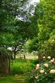 Fenced meadow with trees seen from garden
