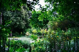 Summery cottage garden surrounded by dense green trees