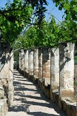 Sunny colonnade with vine-covered pergola