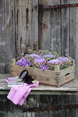 Vintage wooden crate of artichokes, hydrangeas and marjoram flowers behind aubergines on cloth