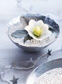 Christrose in einer Schale mit Perlen und Wasser als winterliche Tischdeko