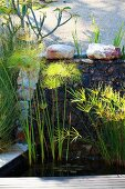 Wasserpflanzen im Becken einer Gartenanlage