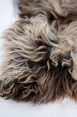 Fur in snow (close-up)