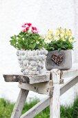 Duftpelargonie und Hornveilchen in unterschiedlich verzierten Blumentöpfen