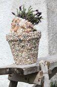 Blühender Schopflavendel im Blumentopf mit Muscheln verziert