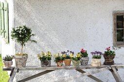 Verschiedene Blumem in unterschiedlich dekorierten Pflanztöpfen