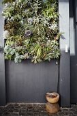 Vertical planting on house wall painted dark grey above small rustic stool on floor