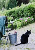 Cat next to metal bucket on cobbled area in front of flowering beds