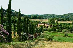 Zypressenallee mit blühendem Oleander als Zufahrt zu Landhaus in toskanischer Landschaft