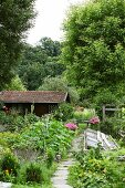 Summery cottage garden with house and tall deciduous trees in background