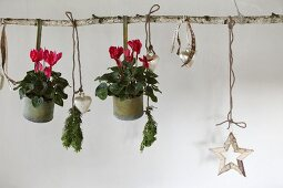 Red cyclamen in metal pots and Christmas decorations hanging from birch branch