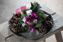 Pine cones and pink and white cyclamen on tray arranged on old wooden stool