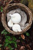 Weidenkorb mit weissen, gehäkelten Zieräpfeln auf Waldboden