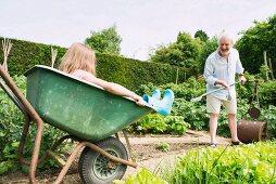Little girl sitting in a wheelbarrow and grandpa working in the garden