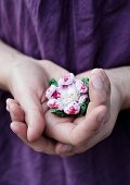 Crocheted flower lovingly cupped in hands