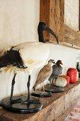 Stuffed birds on mantelpiece