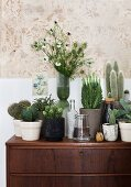 Collection of cacti in various plant pots on 60s-style chest of drawers against wall with stencilled pattern
