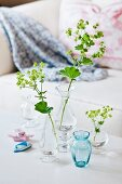 Sprigs of lady's mantle in glass vases
