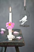 Cosmos flower tied to white candle in small dolls' teacup on rustic wooden stool