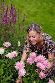 Woman cutting flowers in garden (pink dahlias)