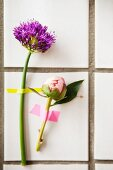 Peony bus and purple allium flower stuck to white-tiled wall with washi tape