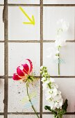 Artistic arrangement of summer flowers stuck to white-tiled wall with washi tape