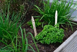 Herbs in herb garden with labels made from disposable wooden cutlery